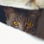 Stray Cat In Belgrade, Serbia — Stock Photo