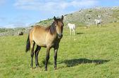 Horse In Mavrovo National Park, Republic Of Macedonia — Stock Photo