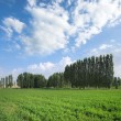 Green Field, Trees Lines And Blue Sky — Stock Photo #74807263