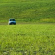 Selective focus of green grass on background blurred car — Stock Photo #75363431
