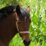 Headshot for horse on background blurred lush vegetation — Stock Photo #75365035