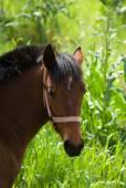 Headshot for horse on background blurred lush vegetation — Stock Photo
