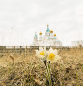 Pulsatilla on the background of the Orthodox Church — Stock Photo