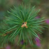 Tree mixer — Foto Stock