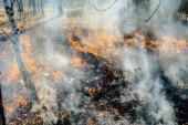 Wildfire — Fotografia Stock