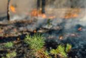 Wildfire — Stock Photo