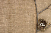 Bird's nest on a branch on a background of burlap — Stock Photo
