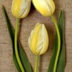 Bouquet of yellow tulips on burlap background — Stock Photo #73053583