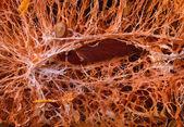 Core pumpkin closeup — Stock Photo