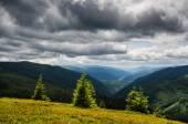 Emerald mountain pine trees — Stock Photo