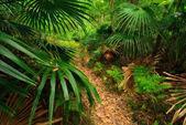 Australiska forest — Stockfoto