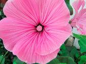 Beautiful flowers and nature — Stock Photo