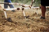 Man run after the plough — Stock Photo