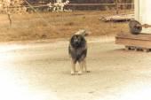 Watchdog old look photo. — Stock Photo