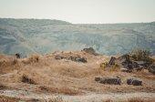 Ruins of Calamita fortress. View — Stock Photo