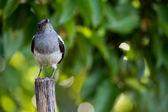 木材と鳥立ち — ストック写真