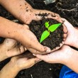Child holding young plant in hands . Ecology concept — Stock Photo #72691799
