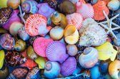 Closeup: colorful sea shells in different shapes — Stock Photo