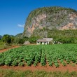 Tabacco Valley de Vinales and mogotes in Cuba — Stock Photo #72789333