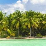 Palm trees over stunning lagoon — Stock Photo #72835967