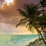 Tropic sunrise through coconut palms — Stock Photo #72836219