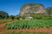 Typical view of Valle de Vinales — Stock Photo
