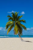 Amazing view of Caribbean beach — Stock Photo