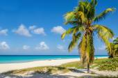 Beach with coconut palm tree — Stock Photo