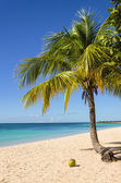 Exotic sandy beach with palm — Stock Photo