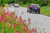 Flower field and cars — Stock Photo