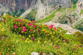 Mountain flowers and pine, Dolomites, Italy — Stock Photo