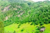 Green alpine meadows, Zillertal, Austria — Stock Photo