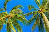 Amazing coconut palm trees  — Stock Photo