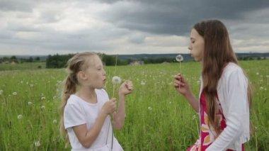 Girls in the field blowing on dandelion in hand — Stock Video