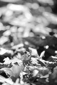フォークの地位と Farmer(miniature. — ストック写真