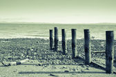 Tararu Beach, Thames, Coromandel. — Stock Photo