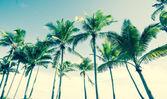 Tropical vintage palm image. — Stock Photo
