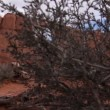 Natural stones in Arches National Park — Stock Video #73831677