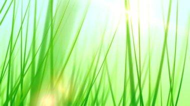 Trucking through blades of grass — Stock Video