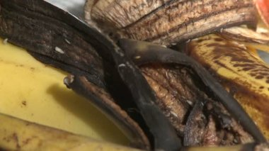 Maggots devour banana peels — Stock Video
