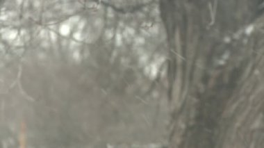 Snow flurry blows through frame — Vídeo de stock
