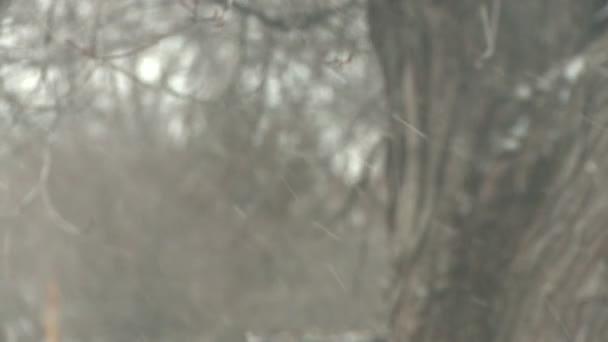 Snow flurry blows through frame — Vidéo