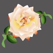 Rosa blanca Vector — Vector de stock