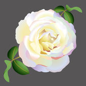 Vector white rose — Stock Vector