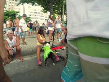 Rio Blocao Carnival for Dogs — Stock Video