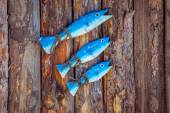 Decorative elements on the marine theme on the background of wooden — Stock Photo