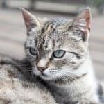 Cat head soft colours — Stock Photo #78041372