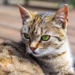 Cat head brigh colours — Stock Photo #78041456