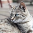 Cat lying and watching soft colours — Stock Photo #78041496