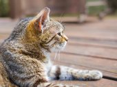 Cat lying profile brigh colours — Stock Photo
